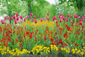 Spring display of color